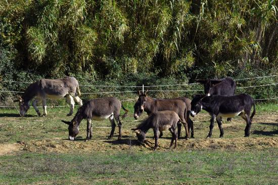 Collestrada, Italia: Donkeys farm