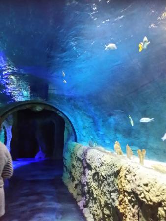 Sealife Orlando Picture Of Sea Life Orlando Aquarium