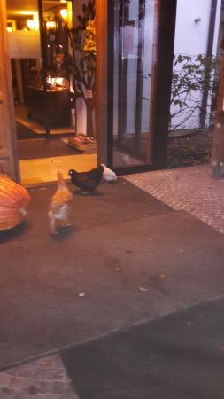 Leipheim, Tyskland: Eingangsbereich mit Hühner
