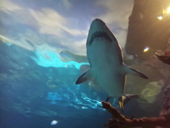 Aquarium Of The Smokies Picture Of Ripley 39 S Aquarium Of