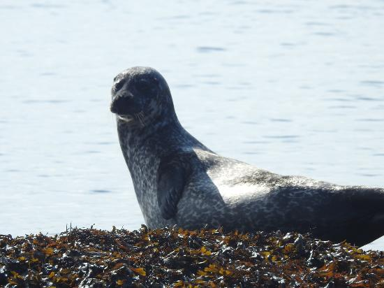 Seehund-Bänke - Picture of Garinish Island, Glengarriff - TripAdvisor