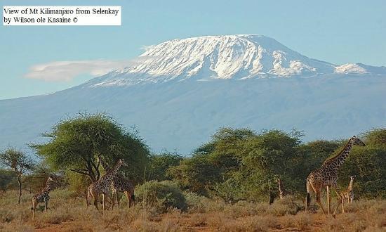 View of Mt Kilimanjaro from Selenkay Conservancy