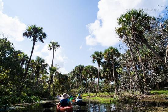 Jupiter, فلوريدا: Guided kayak trip