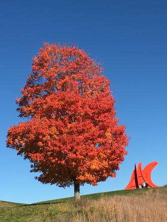 Mountainville, estado de Nueva York: Storm King Art Center - Maple Tree and Calder