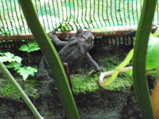 Arenal Eco Zoo