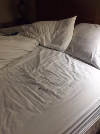 Hampton Inn and Suites Charleston/Mt. Pleasant-Isle Of Palms: Live bug in the bed