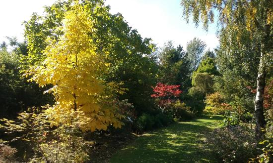 Swadlincote, UK: Autumn colour in the gardens