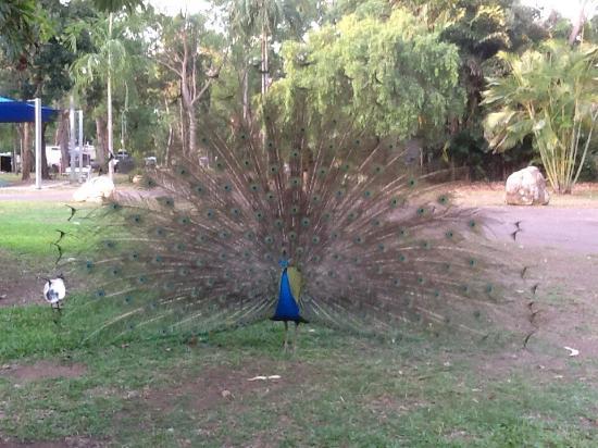 BIG4 Howard Springs Holiday Park : photo0.jpg