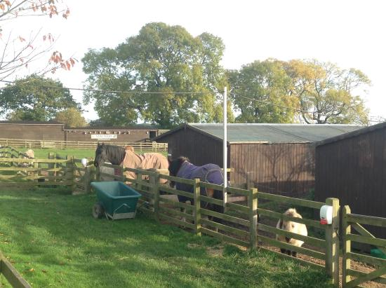 The Sancuary Wildlife Care Centre: View from the cabin bedroom window