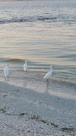 Estero Island Beach Villas: Condo #402