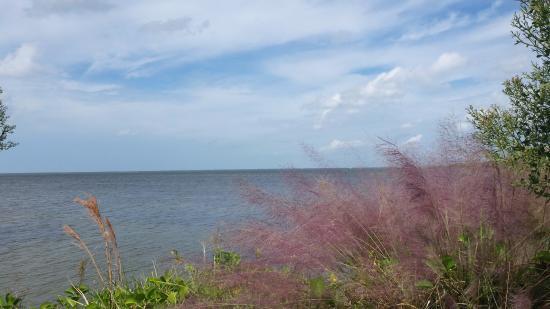 Bradenton, FL: Near the Visitor's Center