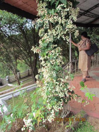 Kuttikkanam, India: Cottage