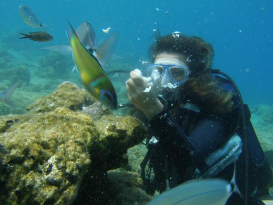 Turihan Hotel: Try diving with Motif Diving