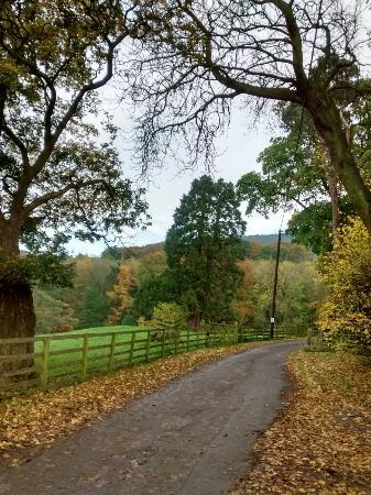 Ingleby Cross, UK: Autumn North York Moors, England