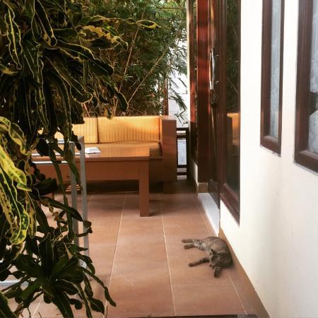 Tropical Hideaways Resort Photo
