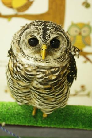 Owl Cafe Mohumohu