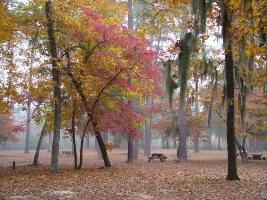 Bishopville, SC: fall colors