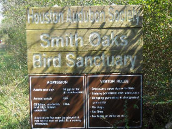 High Island, TX: Bird Sanetuary