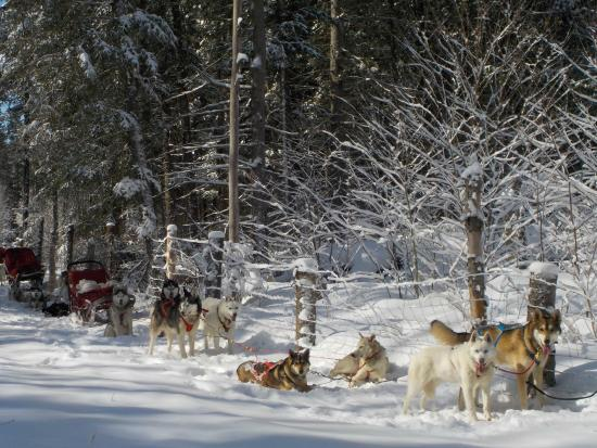 Alaskan Adventure Dog Sledding
