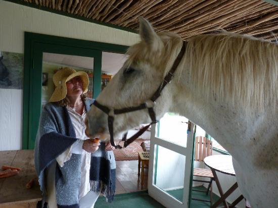 Outeniqua Moon Percheron Stud and Guest Farm: Christine giving Bobbie his just reward of carrots after a long days hauling