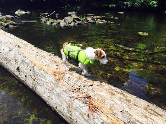 Santa Fe Canoe Outpost day trips: My dog soaking in the fun