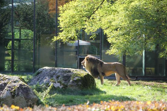 picture of augsburg zoo augsburg tripadvisor. Black Bedroom Furniture Sets. Home Design Ideas