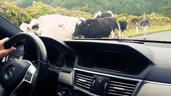 Rui Medeiros - Azores Private Tours: 2015-11-01-17-43-00-827_large.jpg