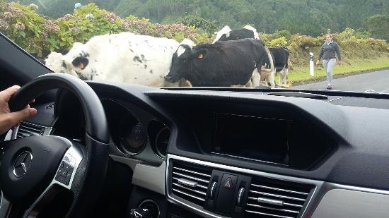 Rui Medeiros - Azores Private Tours: 20151101_154547_large.jpg
