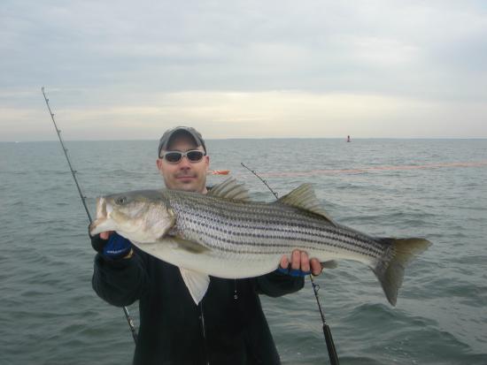 chesapeake bay fishing charters rockfish & striped bass -charter, Fishing Bait
