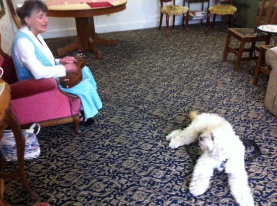 "Didjeridoo Dreamtime Inn: Holly Tannen crooning ""Bold Riley"" to my dog, Riley"