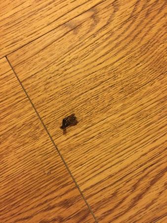 Days Inn Boerne: more dead bugs
