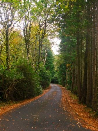 Gortaclare, UK: road up to the house lined with trees