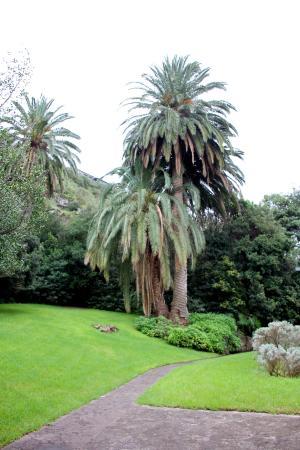 Fettgew chse picture of jardin canario las palmas de for Jardin canario