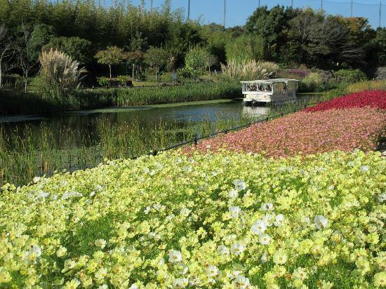 Hamanako Garden Park : 東西水路沿いのコスモスキャンパスシリーズとガーデンクルーズ(11月上旬)