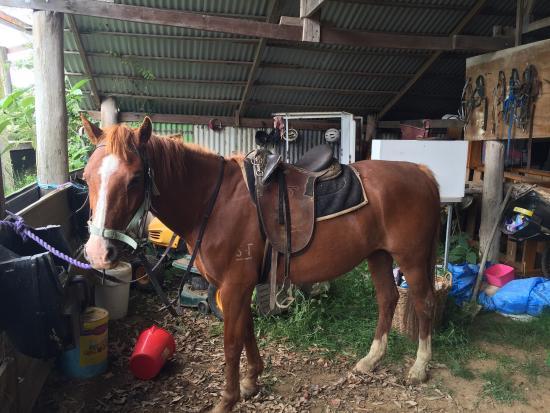 Tirrintippin Horse Riding: photo1.jpg