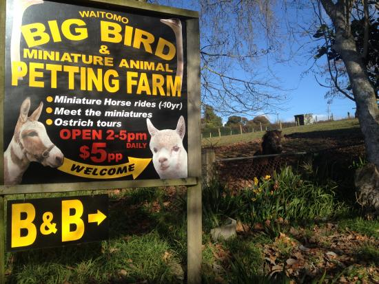 "Waitomo Big Bird Bed & Breakfast: ""Animal Lovers Heaven"""