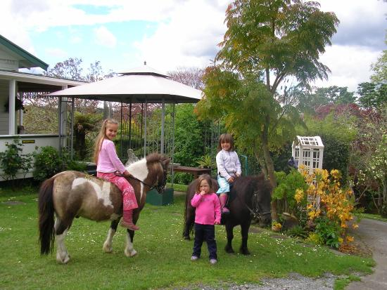 "Waitomo Big Bird Bed & Breakfast: ""Memories"""