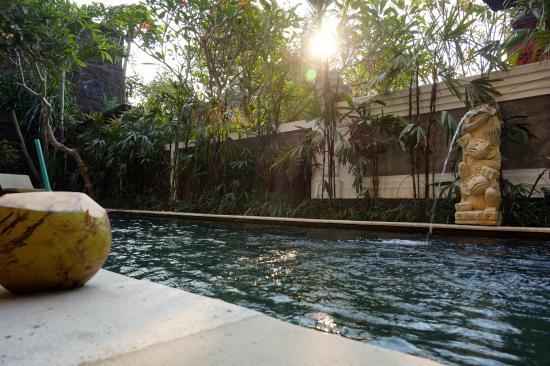 coconuts pool side picture of van mandri guesthouse kerobokan rh tripadvisor com sg