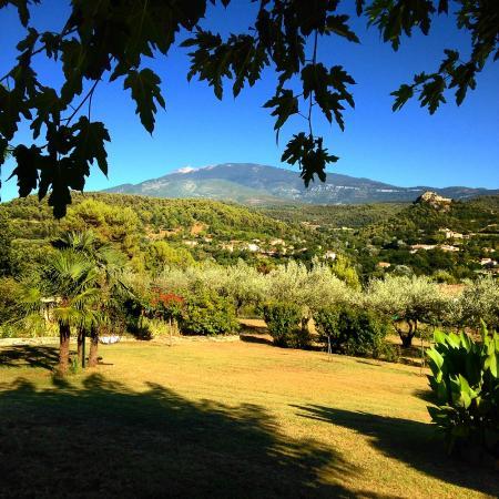Chanterelle : Marie Françoise's garden (and Mont Ventoux)