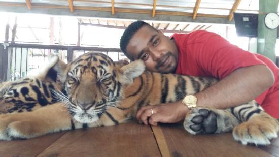 how to get to tiger kingdom phuket