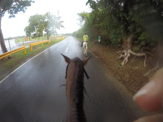 Taxi Horses: It started to rain and then it poured. It was fabulous!!!