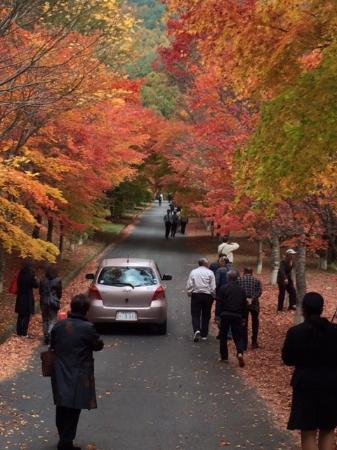 Minowa-machi, Japão: もみじのトンネル
