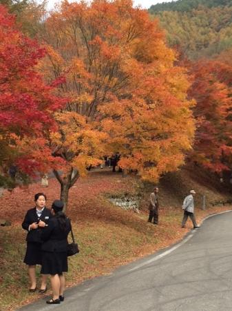 Minowa-machi, Japão: 素晴らしいもみじ