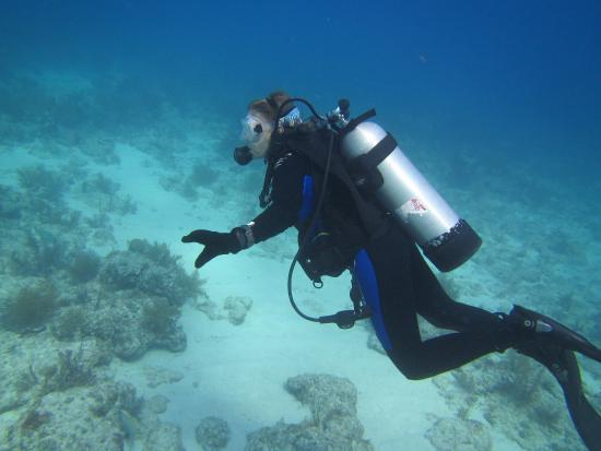 Sea Monkeys Water Sports: photo5.jpg