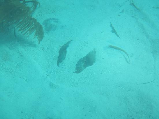 Sea Monkeys Water Sports: photo6.jpg
