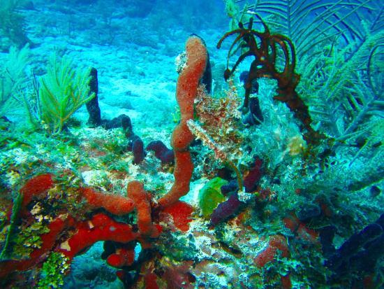 Sea Monkeys Water Sports: photo7.jpg