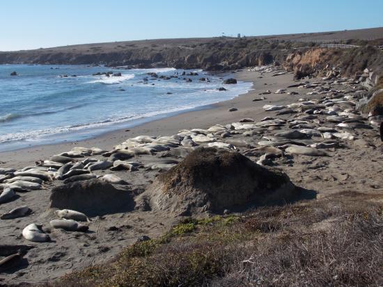 Harbor House Inn Elephant Seal Beach