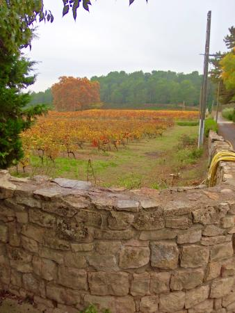 Calvisson, Γαλλία: Vineyard in the fall