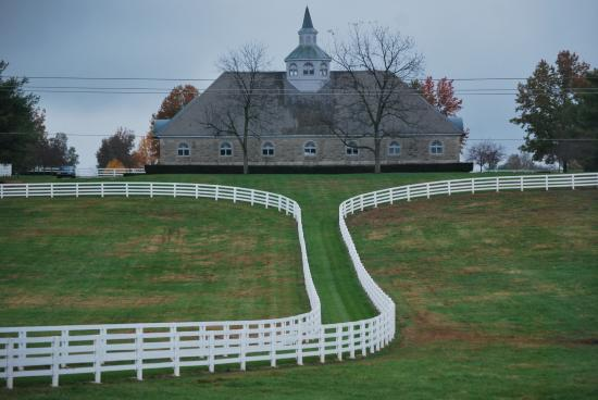 Horse Quot Barn Quot State Of The Art Picture Of Thoroughbred