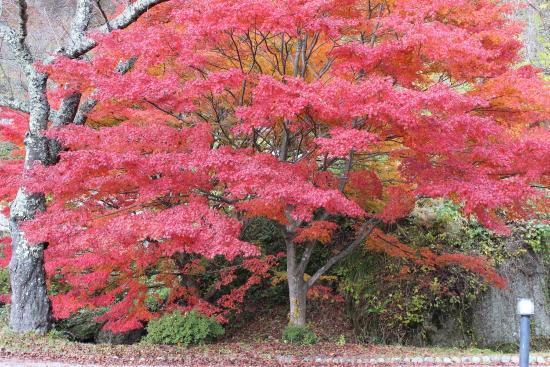 Kimimachizaka Park: photo0.jpg